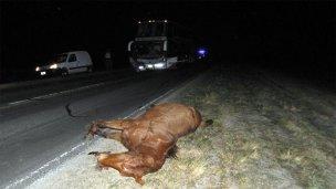 Un caballo se les atravesó en el medio de la ruta
