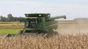 La siembra de maíz superó las 250 mil hectáreas