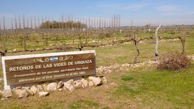 Resultado de imagen para viñedos y bodegas de entre rios urquiza