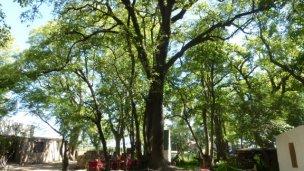 El Árbol de san Expedito, contado por Selva Almada