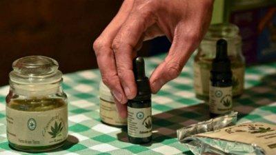 Cannabis: el Senado debatirá el uso medicinal y podría ser ley