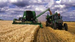 ¿Qué permitió a Entre Ríos cosechar más trigo este año?