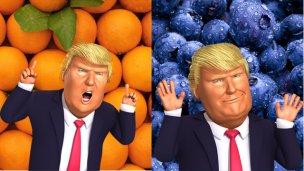 Trump pone en problemas a los cítricos, pero no al arándano