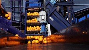 La fábrica de jugos ya exporta a Sudáfrica y Dinamarca