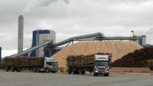 La Asamblea ambiental no quiere que deroguen la ley de la madera