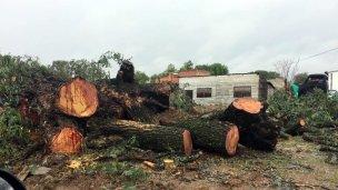 Proponen que la madera de la tala y poda sea declarada de utilidad pública