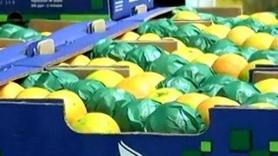 En plena crisis, citrícola entrerriana se abre paso a Rusia