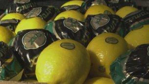 Buena noticia para el citrus: EEUU abrió las puertas a los limones
