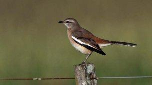 En 24 horas, los entrerrianos avistaron 165 especies de aves