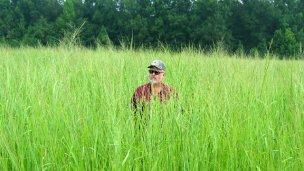 ¿Qué es el switchgrass que investigan cerca del río Uruguay?