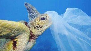 Día Mundial de los Océanos: en 2050 habrá más plástico que peces