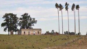 El misterioso círculo de 10 palmeras que desvela a los historiadores