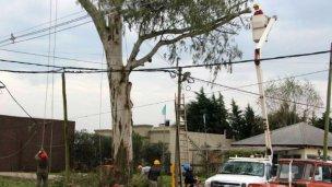 Se extrajo un eucalipto de más de 20 metros