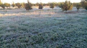 Un manto blanco cubrió los campos entrerrianos