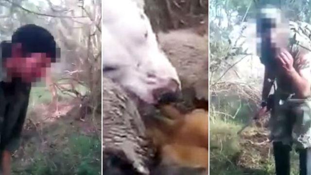 Capturas del video hecho por los cazadores.