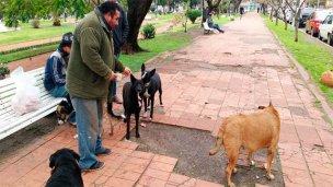 Prefiere vivir en la plaza para no abandonar a sus perros
