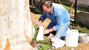 Otro árbol envenenado en Colón