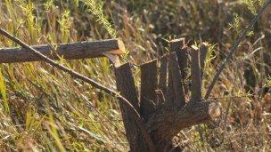Denuncian la tala indiscriminada de árboles autóctonos