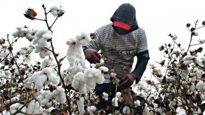 Entre Ríos, entre las que siembra el algodón que tocó fondo