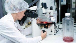 Inmuner desarrolló una nueva vacuna aviar