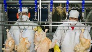 Los mexicanos también quieren saborear los pollos entrerrianos