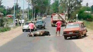 Tras la muerte de un potrillo, otro caballo cayó en la vía pública
