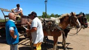 TAS: harán registro de carreros y de vacunación de equinos