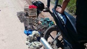 Rescataron aves autóctonas en un operativo realizado en Colón