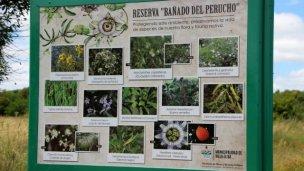 Proyectan la conservación de la flora nativa del balneario