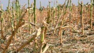 Alerta en el campo entrerriano, ante posibles sequías