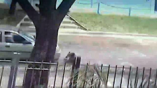 Imperdonable: Remisero atropelló deliberadamente a una perra