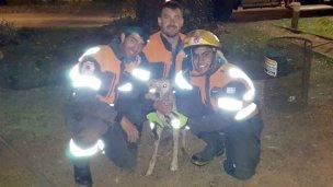 Dos perros rescatados por los bomberos