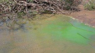 Alertan sobre la presencia de algas en Banco Pelay
