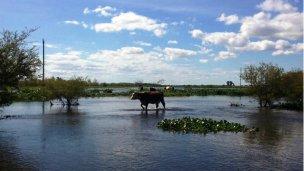 Crece el río Paraná