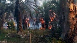 Heroica lucha de vecinos y bomberos para frenar el fuego